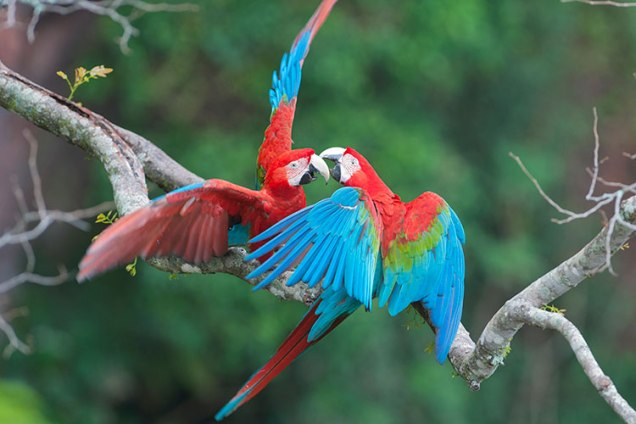 macaws_cs