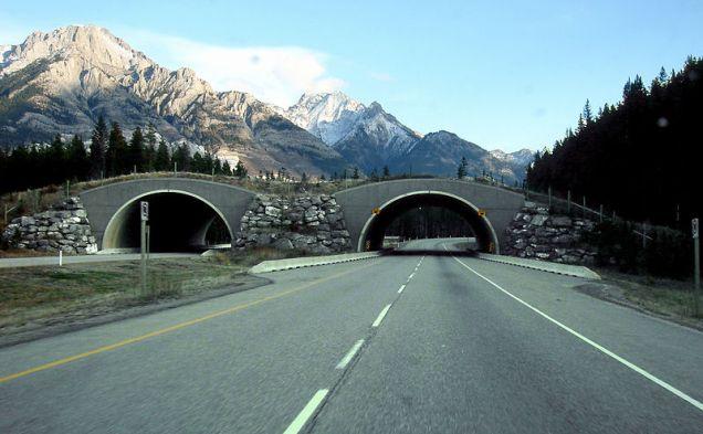 Uma das pontes para travessia de animais