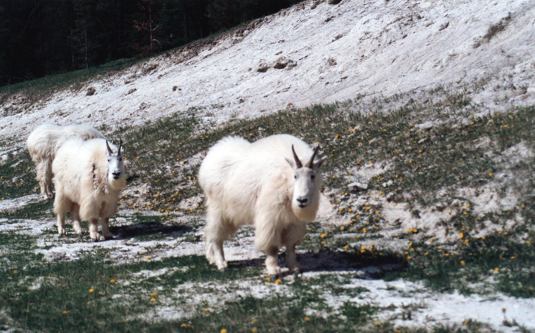 animais em Banff