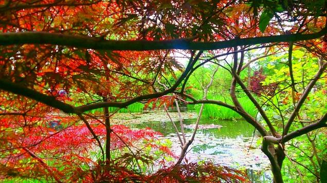 vale a pena visitar os jardins de Monet