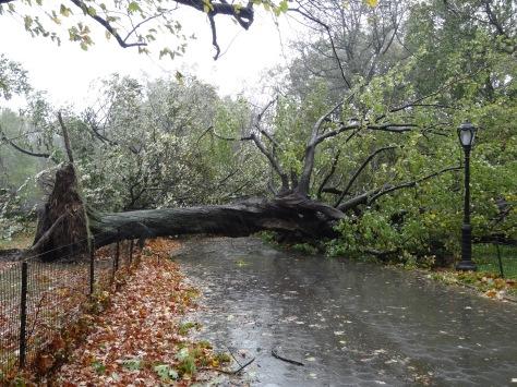 Efeitos do furacão Sandy no Central Park