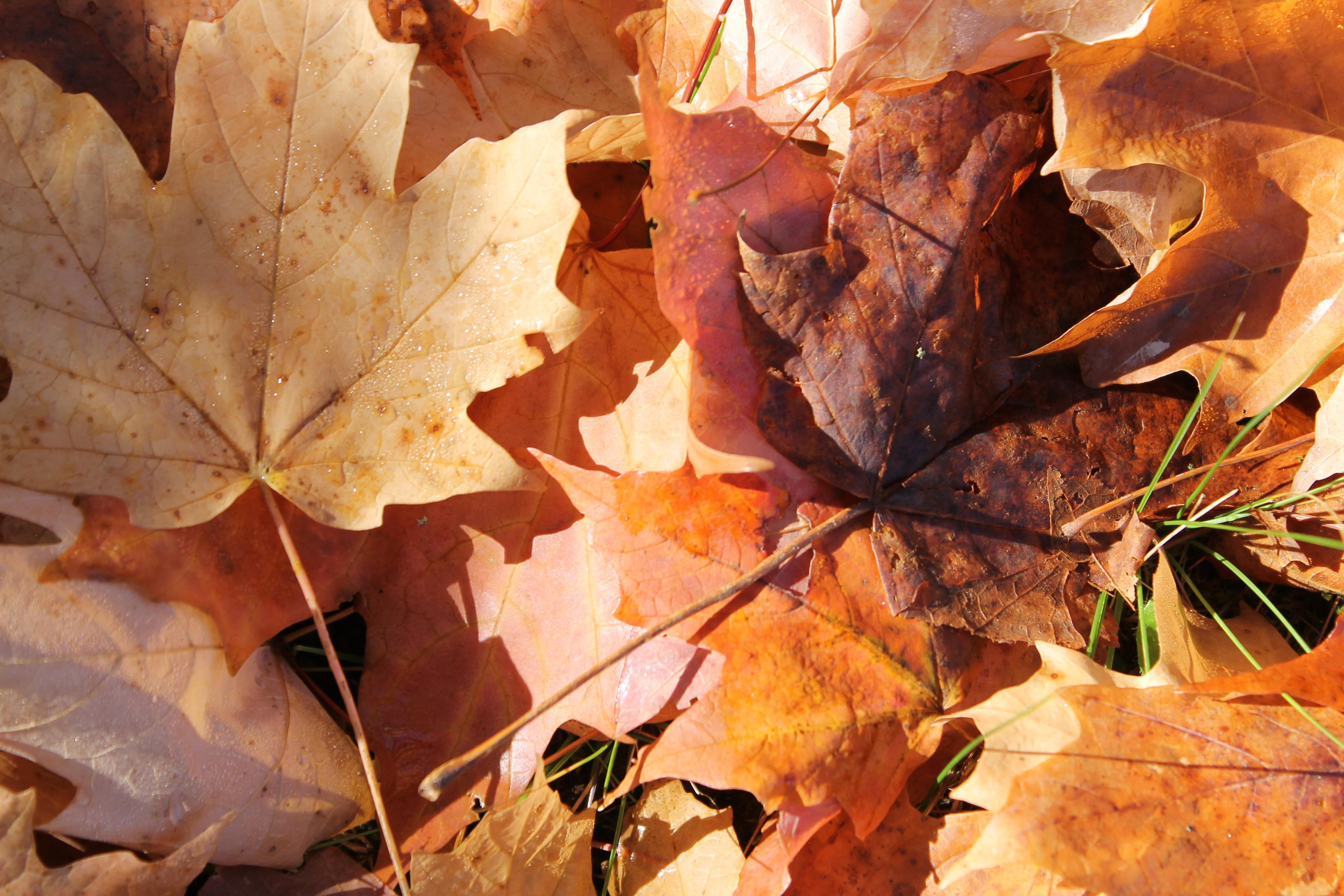 Minnewaska nova iorque fall foliage outono