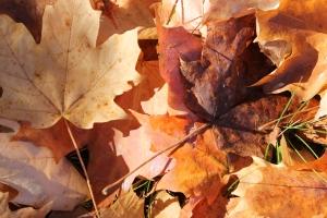 outono em NY