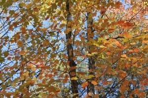 outono em Nova Iorque