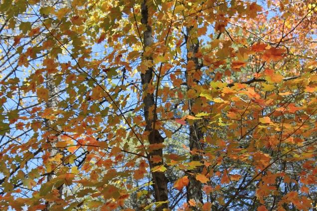 outono em Nova Iorque minnnewaska