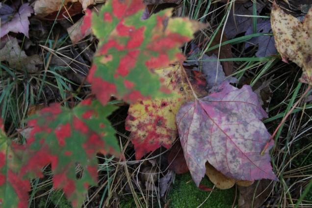 Minnewaska nova iorque fall foliage