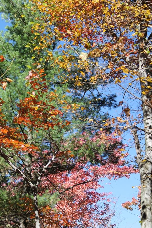 árvores no parque estatual Minnewaska, em New Paltz, NY