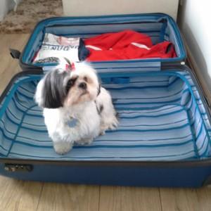 Tem quem ache que vai na mala!