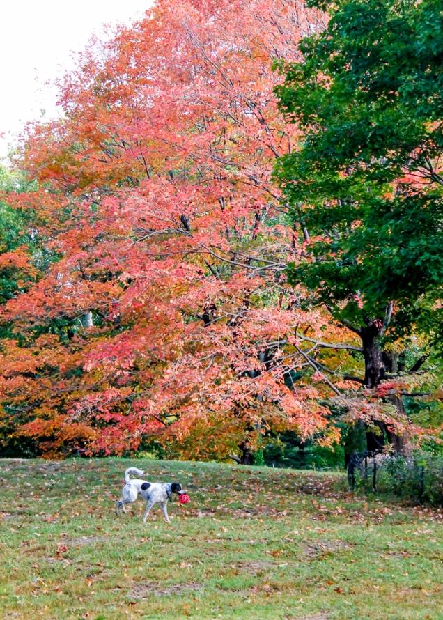 central park no outono Nova Iorque