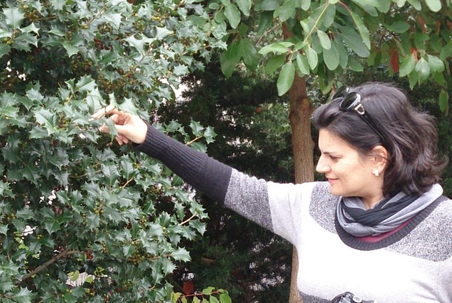 Sabe a plantinha de plástico que você compra na 25 de março Lá tem natural, assim, no parque.