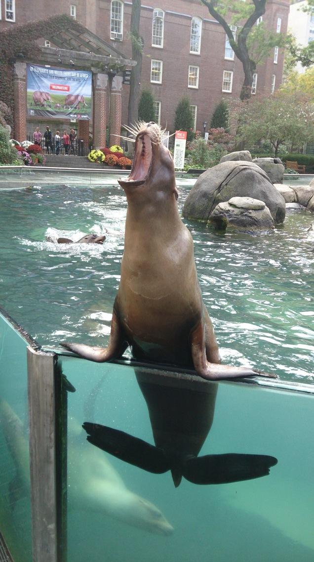 zoológico de nova iorque Central Park