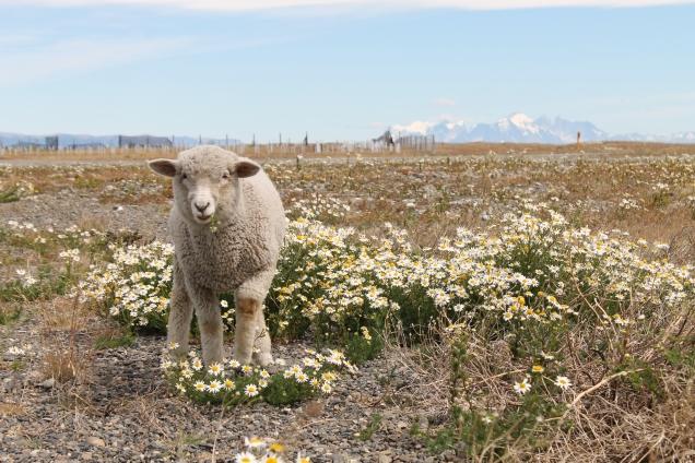 posto de gaslina Torres del Paine