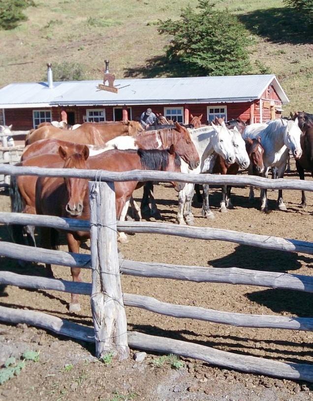 Las Torres horses-2467