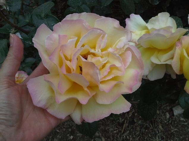 Beleza e perfume também nos Jardins da Notre Dame