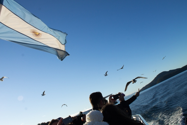 gaivotas Bariloche