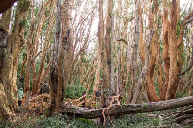Bosque Arrayenes
