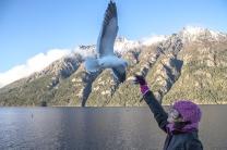 Gaivotas comem na mão dos turistas em pleno voo, no Lago Nahuel Huapi, passeio Puerto Blest - foto Marcia Picorallo
