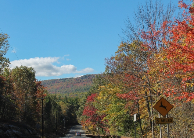 A estrada ladeada de árvores coloridas: tudo o que eu queria!