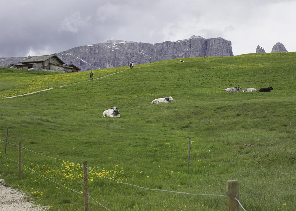 Dolomitas alpe di Siusi
