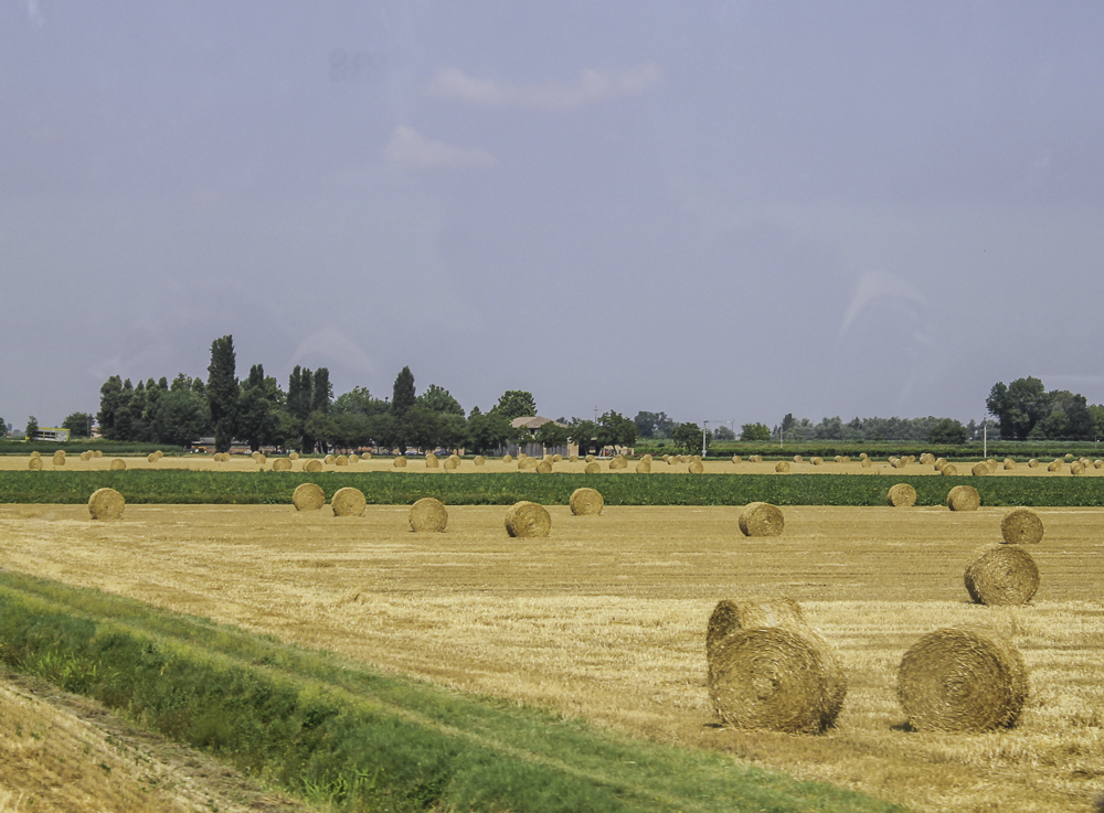 Campos da Toscana quando florescem