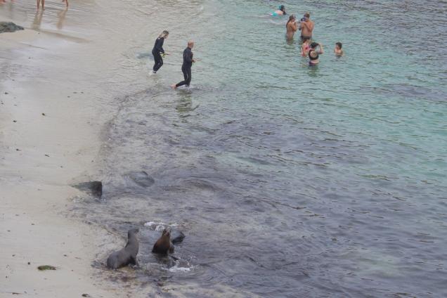 la-jolla seals