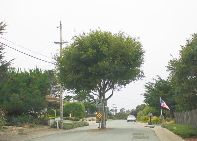 Vi várias ruas com árvores no meio delas - sem ilhas!