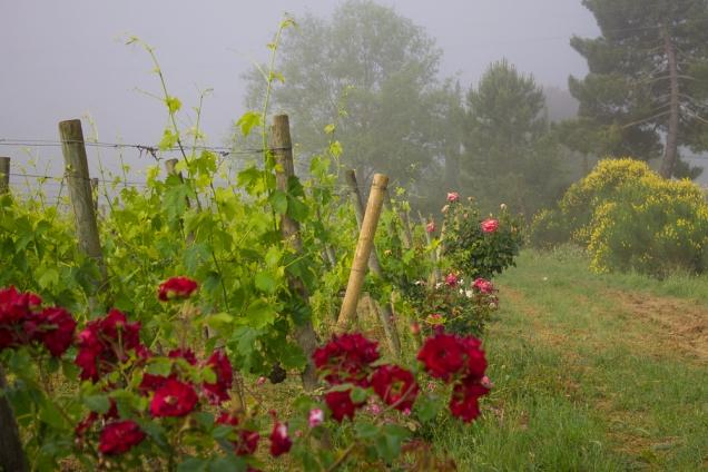 Toscana onde ficar