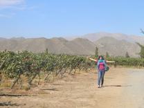 vinícolaem Santiago