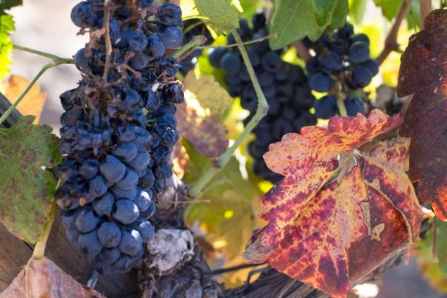 produtora vinho chileno