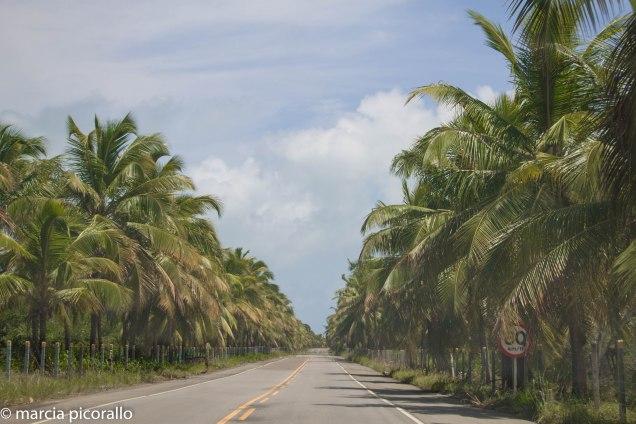estradas Alagoas