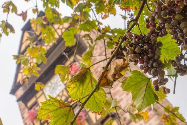 Riquewihr vinhos Alsácia