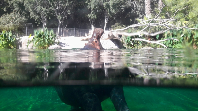 zoo-san-diego