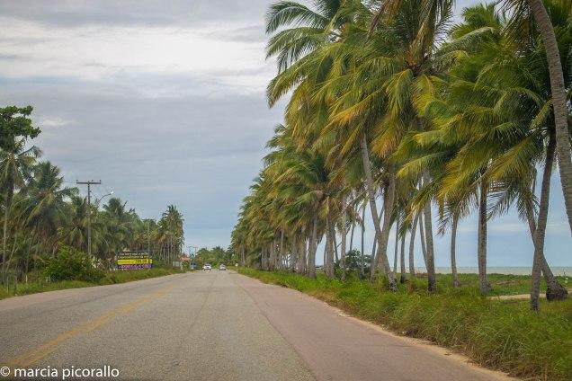 Maceio-Maragogi-estradas