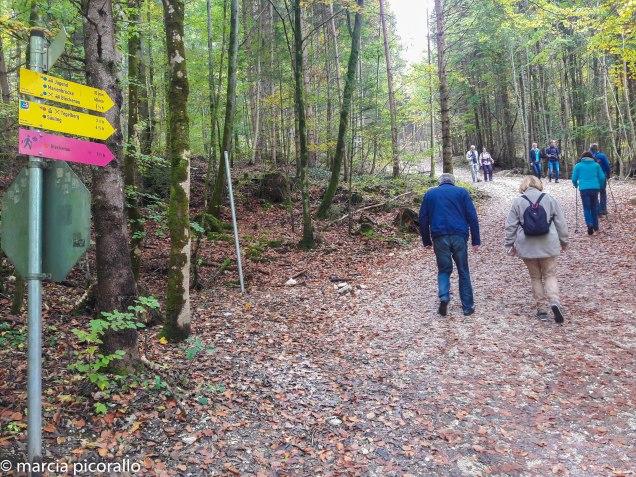 Neuschwenstein Castelo-trilha-Alemanha
