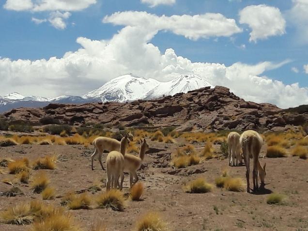 Atacama que passeios fazer