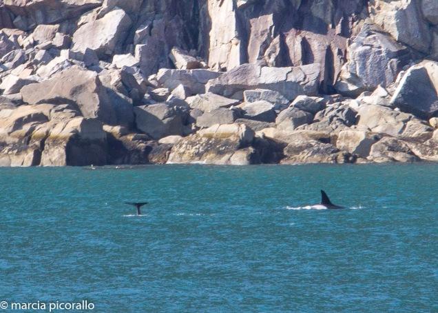 baleias Alasca