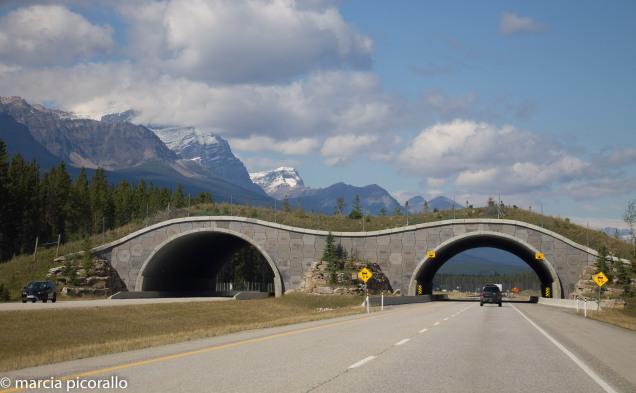 Alberta Canada-banff
