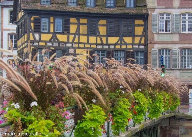 estrasburgo outono