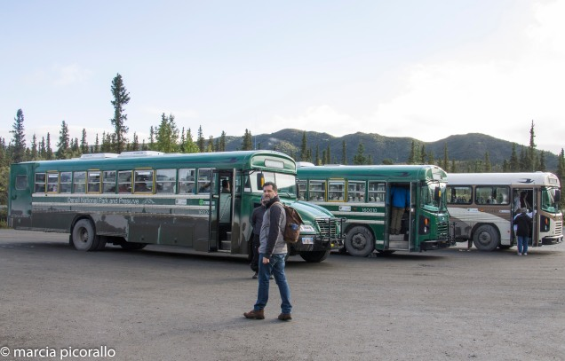 onibus transporte Denali Alasca